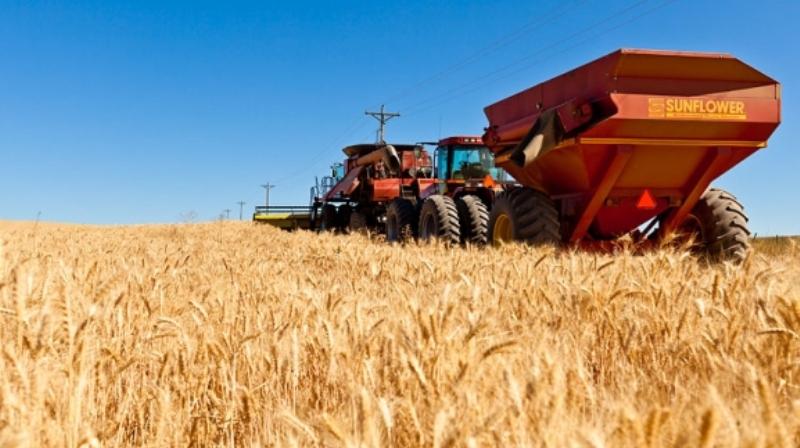 S'përmbushen nevojat me grurë edhe sivjet, Kosovës në vit i duhen 400 mijë tonë