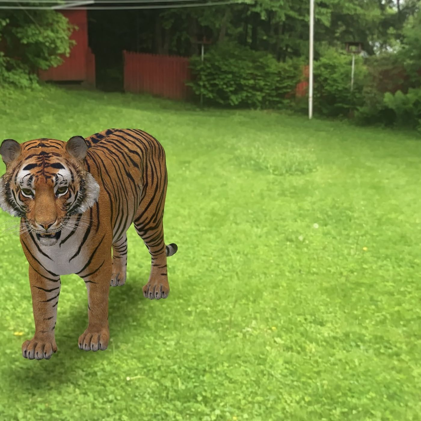 Si të shihni një tigër, luan dhe panda në 3D